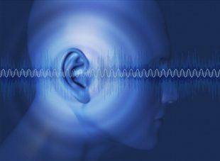 oreillecortexaud